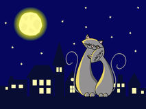 Night cats. Two grey cats in love sitting at the roof at night Stock Photography