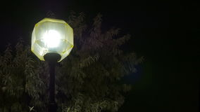 Night city. Beautiful street lamp on the background of trees. stock video footage