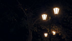 Night city. Four beautiful street lamp surrounded by trees. stock video footage