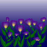 Night colors flowers Royalty Free Stock Photo