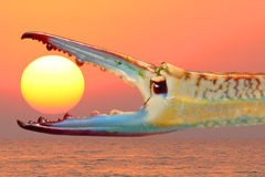 When The Night Comes. Blue crab claw on a sunset background Royalty Free Stock Photo