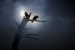 Night of crows. Full moon in an overcast night with crows and naked tree (added some digital grain Vector Illustration