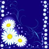 Night daisies Stock Images