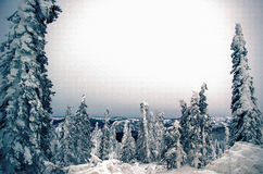 Night on the Dalton Highway. Trees stand encases in snow under cloud filled sky Stock Photos
