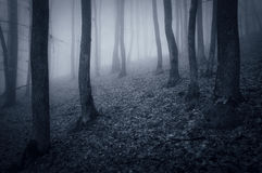 Night in a dark forest with fog trough trees Stock Photo
