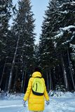 Night in a dark forest, girl walk in the woods before Christmas. New year, covered in snow. Spruce trees pine trees covered with s. Now Stock Images