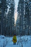 Night in a dark forest, a walk in the woods before Christmas. New year, covered in snow. Spruce trees pine trees covered with snow.  Stock Photos