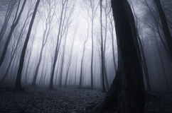 Night in a dark mysterious haunted forest with fog Stock Photo