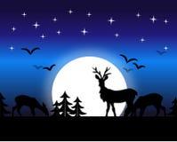 Night deer Royalty Free Stock Photo