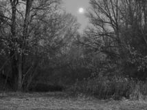 Black and white view of the night forest with the moon. Night dense forest. The moon in the sky illuminates the clearing. Ominous noir atmosphere. Black and stock photos