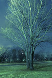 Night elm tree Royalty Free Stock Images