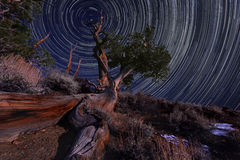 Night Exposure Star Trails of the Sky in Bristlecone Pines Cali Royalty Free Stock Images