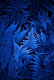 Night fern. Close up photography of night fern Stock Photography