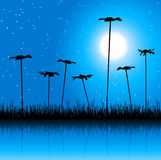 Night field and flowers. Vector illustration Stock Photography
