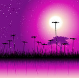 Night field and flowers. Vector illustration Royalty Free Stock Photography