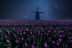 Night Field of Tulips and Windmill. Landscape with stars and flowers. Traditional Holland view Stock Photos