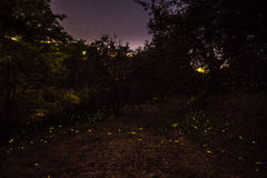 Night and fireflies Royalty Free Stock Photos