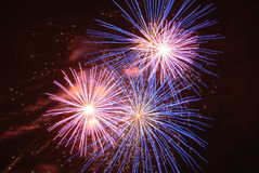 Night fireworks3. Multicolor Night fireworks like a flower Royalty Free Stock Image