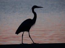 Night Fishing. Night Heron bird at Sunset stock image