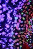 Night flower light. Royalty Free Stock Photo