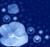 Night Flowers Stock Images