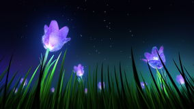 Night flowers in grass loop stock video