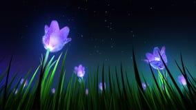 Night flowers in grass loop stock video