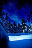 Night forest. Night scene of winter forest under new snow in Germany Stock Photo
