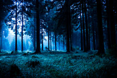 Night forest stock photos