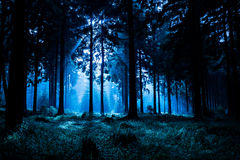 Night forest. Night scene of autumn forest in Thuringia, Germany