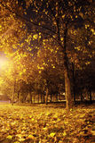 Night forest royalty free stock image