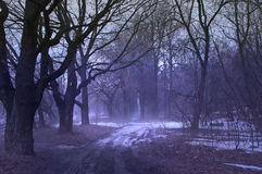 The night forest. Fog in the night forest Stock Photos