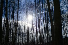 Night forest full moon bushes trees bright fantasy scene horror royalty free stock images