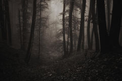 Night in forest at Halloween with fog. Settling stock photo