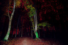 Night in forest.Light painting in forest Stock Images