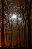 Night forest lit with moonlight Stock Photos