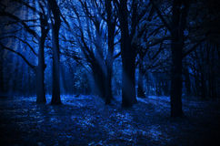 Night forest Royalty Free Stock Photo