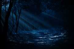 Night forest Royalty Free Stock Photos