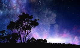Night forest scene. Background picturesque image of night forest and starry sky royalty free stock photography