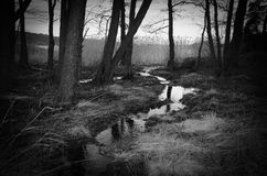 Night forest scene with small creek royalty free stock photos