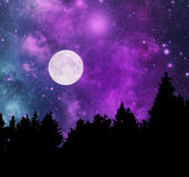 Night in forest Royalty Free Stock Images