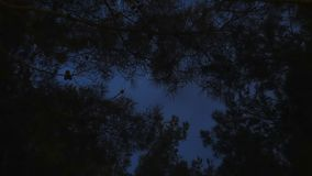 Night in forest, sky timelapse. Clouds. Forest and night sky, clouds stock video footage