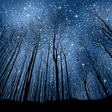 Night forest. A stars on the night sky above the forest Royalty Free Stock Photography