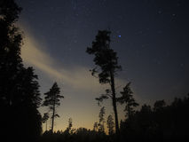 Night sky stars over forest and trees Stock Images