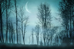 Night forest Stock Photography