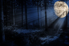 Night  in a forest Royalty Free Stock Photo