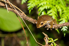 Night frog Royalty Free Stock Photos