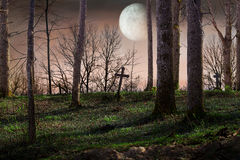Night with a full moon Royalty Free Stock Images