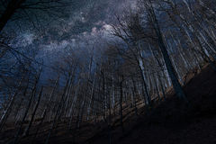 Night full of stars seen through trees Milky Way through trees Stock Images