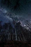 Night full of stars seen through trees Milky Way through trees Royalty Free Stock Photography